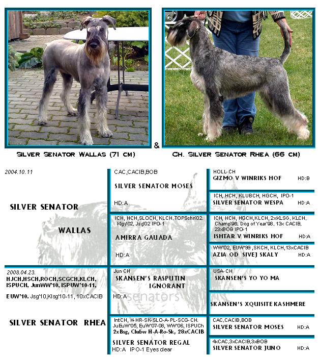 Schnauzer - Previous litters 2011.D 0