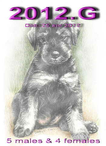 Schnauzer - Previous litters 2012.G 0