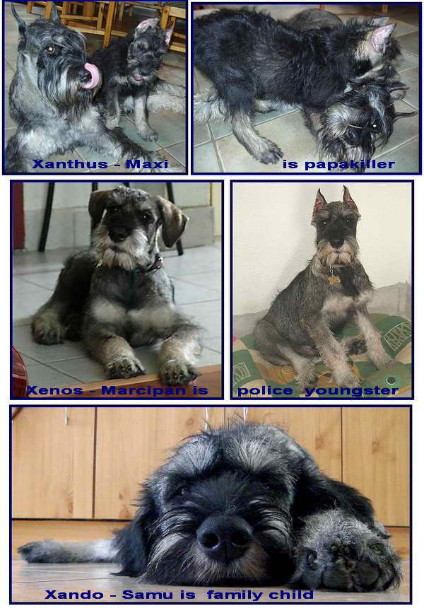 Schnauzer - Previous litters 2010. X. 0