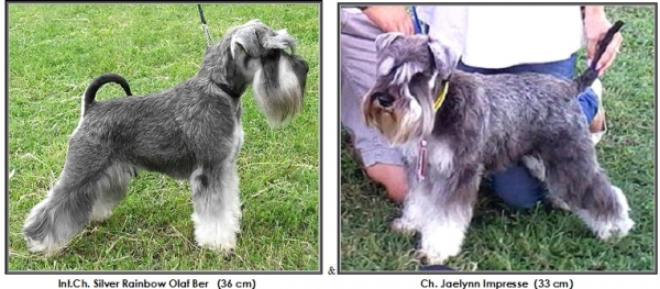 Schnauzer - Previous litters 2018.J 0